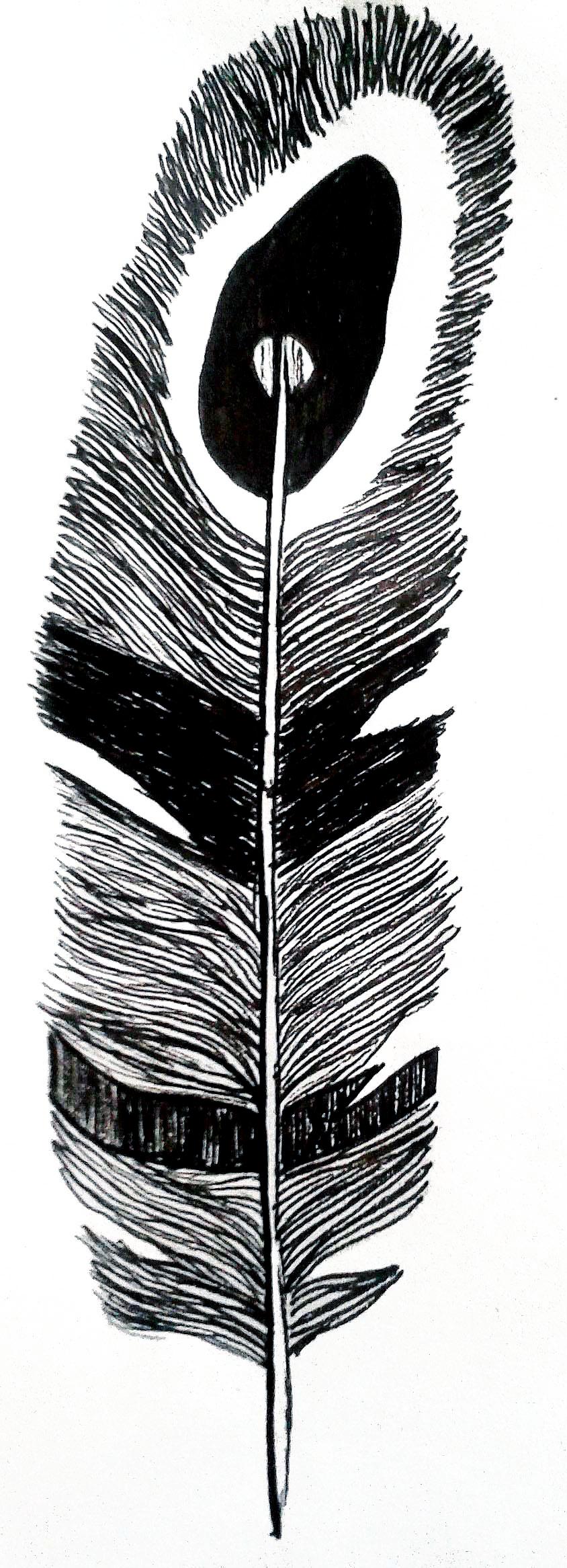 Légère comme une plume | Illustration